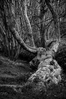 Arbres / Trees