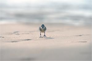 oiseau-4114